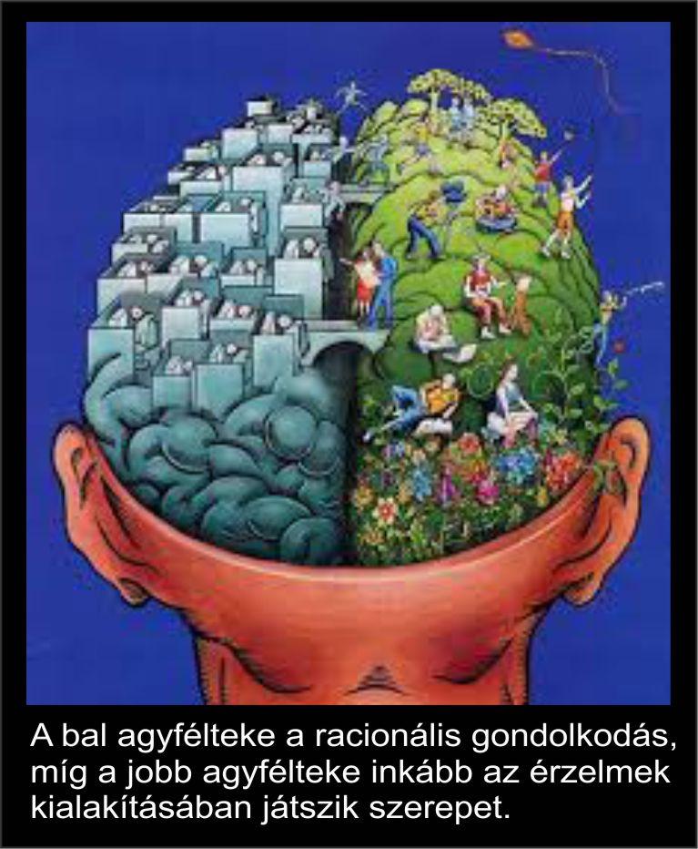 agyféltekék1