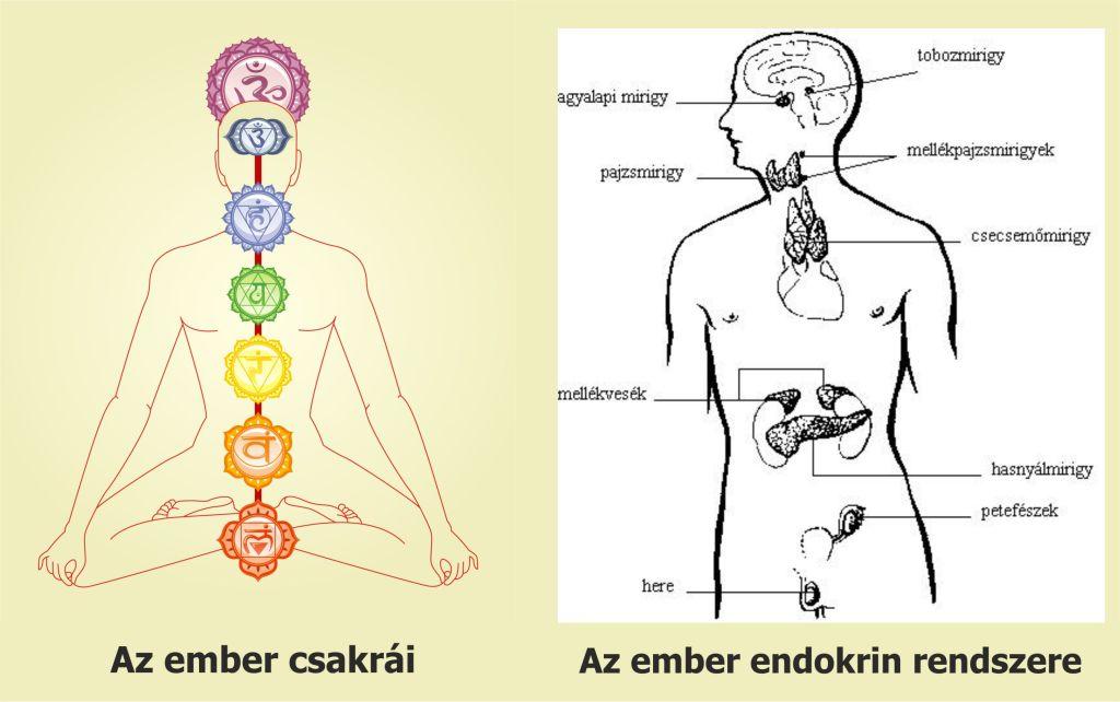 chakra vs endokrin