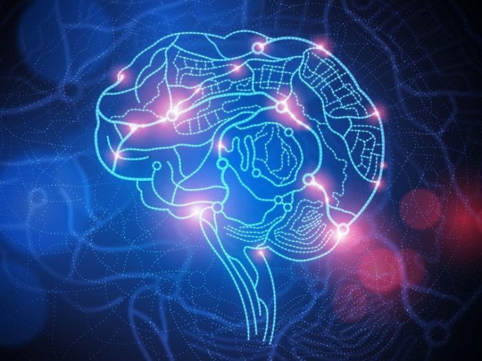 agyműködés