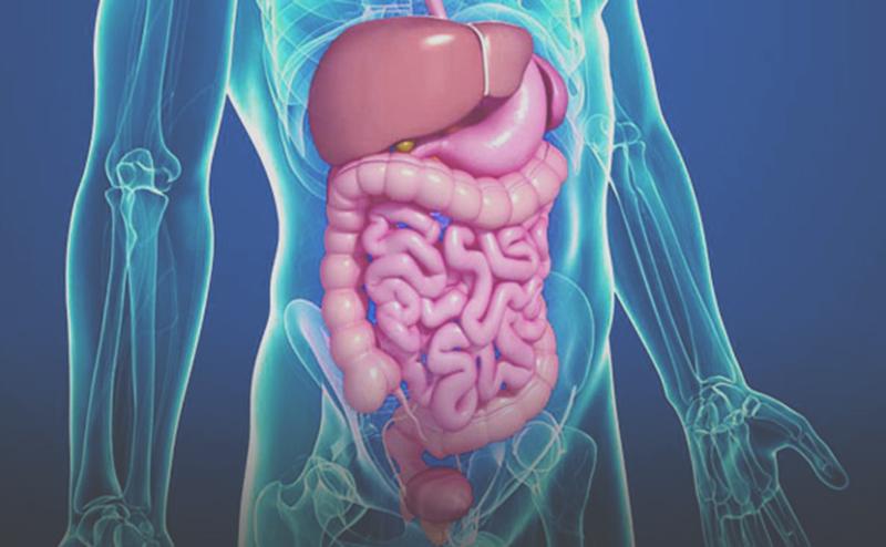 emésztőrendszeri baktériumok)