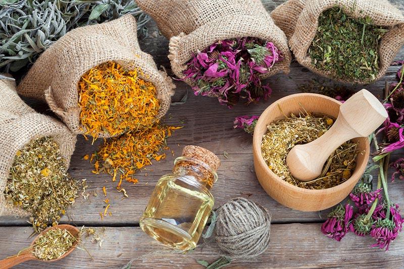 Növények/Gyógyteák készítése