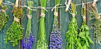 gyógynövények tavasszal