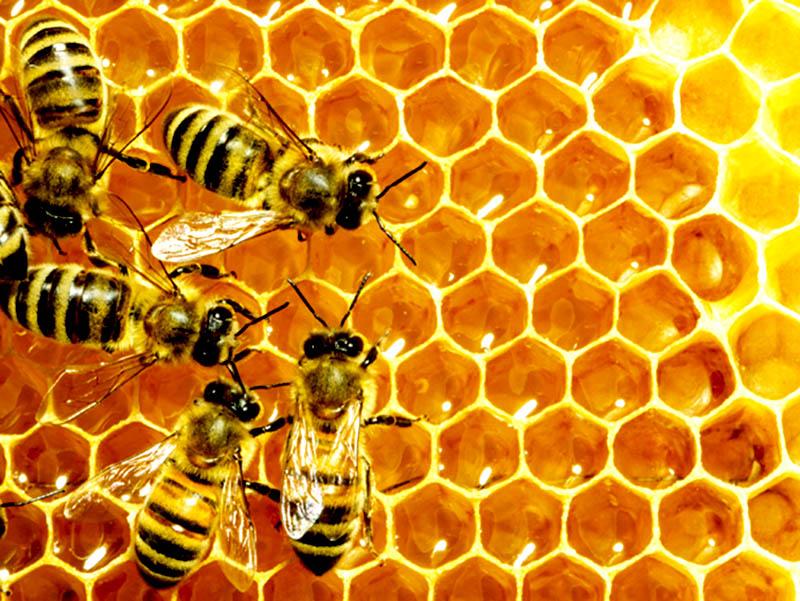 Apiterápia - gyógyszerek a méhektől - Mental Fitness Guru