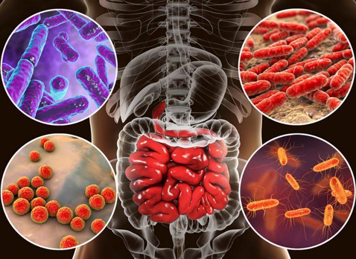 probiotikumok típusai