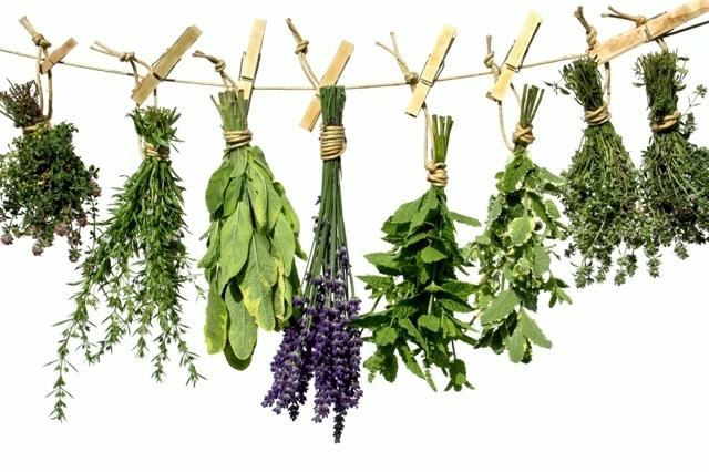 gyógynövények története