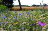 nyári gyógynövények